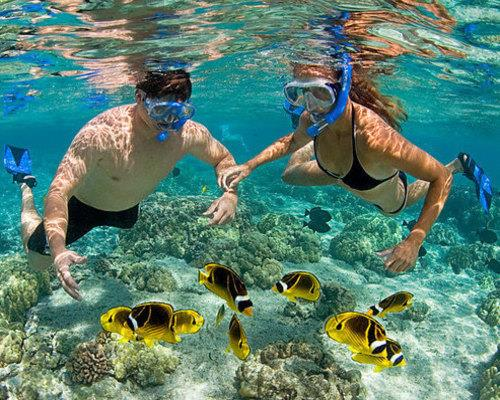 Top Rated Snorkel